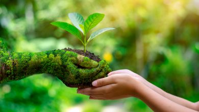 Photo of 9 Things You Can Do Today to Be More Eco-Friendly